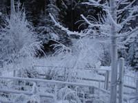 winterdream3ds3.th.jpg